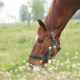 Pferdepension Detlef Franke