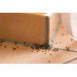 Pest Control Oakey