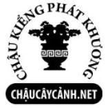 Chau Cay Canh