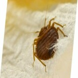 Bed Bug Control Canberra
