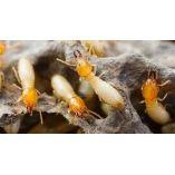 Pest Control North Fremantle