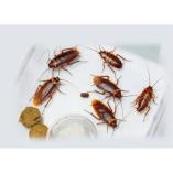 Pest Control Athelstone