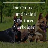 Online-Hundetraining