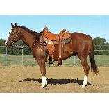 Saddle Righ