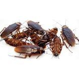 Pest Control Sandy Bay