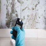 Pembroke Pines Mold Inspection