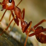 Pest Control Woolloongabba