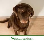 Hund als Haustier - Hunderatgeber