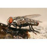 Pest Control Vaucluse