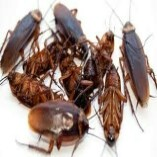 Pest Control Gungahlin