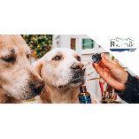 CBD Tincture Oil Drops for Pets - Can CBD Tincture oil drops help your pets?