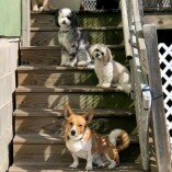 Harpers Doggie Daycare