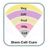 Stem Cell Cure Pvt. Ltd