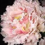 Grown Florists