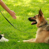 Southern Nevada Dog Training