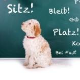 sitz-platz-bleib