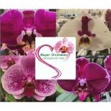 Meyer Orchideen AG