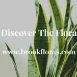 Brook Floras