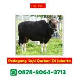 Wa 0878 8064 3713 Harga Sapi Qurban Di Jakarta