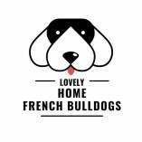 Cute French Bulldogs For Sale in Philadelphia