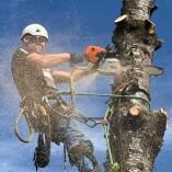 Der Baumspezialist