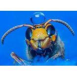 Buzzoff wasp