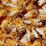 Pest Control Moorooka
