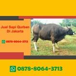Jual Sapi Qurban Jakarta