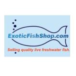 Exotic Fishshop
