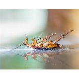 Pest Control Botany