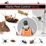 Pest Control Manly