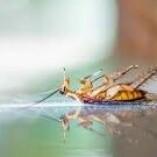 Pest Control Wanniassa
