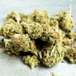 Hemp Cannabis Dispensary