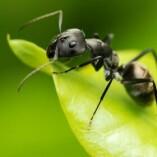 Pest Control Lyneham