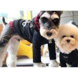 Puppy Angel Vertrieb Schweiz
