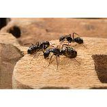 Pest Control Nicholls