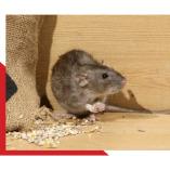 Rodent Control Sydney