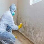 Chicago Mold Removal