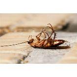 Pest Control Randwick