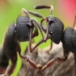 Pest Control Turner