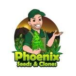 Phoenix Seeds & Clones