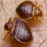 Pest Control Newtown