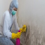 Mold Experts of Tucson