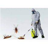 Pest Control Coorparoo