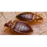 Pest Control Morningside