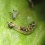 Pest Control Iluka