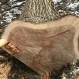 Charles Kolb & Sons Logging