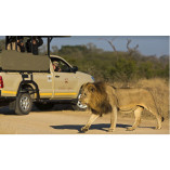 Kruger Wildlife Safaris