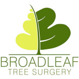 Broadleaf Tree Surgery