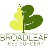Broadleaf Tree Surgery